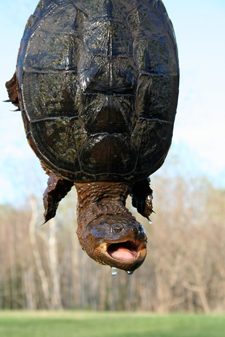 Turtle rescued from the road