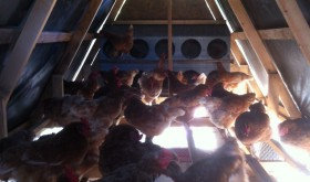 Essex Farm's new chicken coop