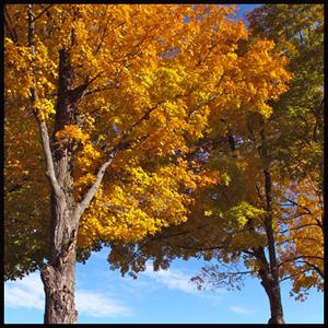 2012 Peak Foliage?