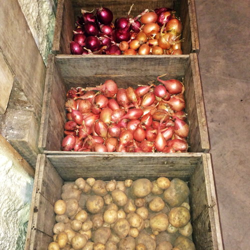 Potatoes and onions at one of the CSAs in Essex (Credit: virtualDavis)