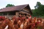 Full and By Farm: Preparing Fields