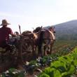 Full and By Farm: A Pretty Beautiful Season