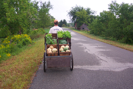 Carting some fruits and veggies from Full and By Farm (Credit: Sara Kurak)