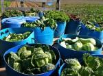 Essex Farm: Considering Seeds