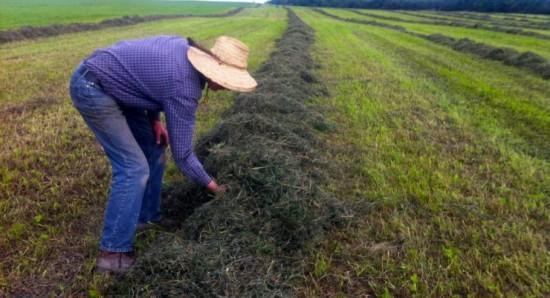 Haymaking at Essex Farm (Credit: Kristin Kimball)