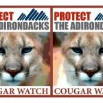 Cougar Watch (Credit: Protect the Adirondacks!)