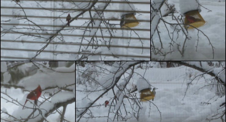 Eve Ticknor bird collage