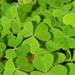 Happy St. Patrick's Day, Essex!
