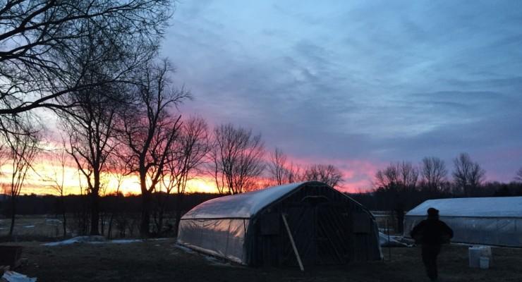 Sunrise at Essex Farm (Credit: Kristin Kimball)