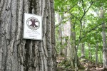 Old-Growth Forest Network Recognizes Dickenson's Point