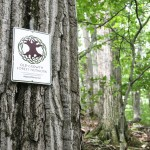 Old- Growth Forest Network Sign and Tree (Credit: Jamie Phillips)