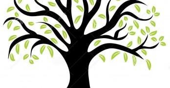 wellness-tree-image-43641150