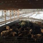 Essex Farm: Seed Order