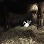 Essex Farm: Indoor Work
