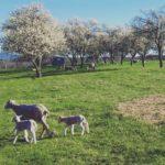 Essex Farm: Teats Out
