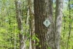 Goff Preserve: Northeast Wilderness Trust Adds 27 Acres to Wildway