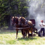 Reber Rock Draftwood: Logging & Lumbering with Draft Horses