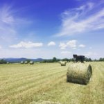 Essex Farm: Perfect for Haymaking