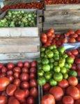 Essex Farm: Wagon Full of Tomatoes