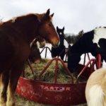 Essex Farm: The Cold Came