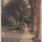 Vintage Postcard: Elm Walk